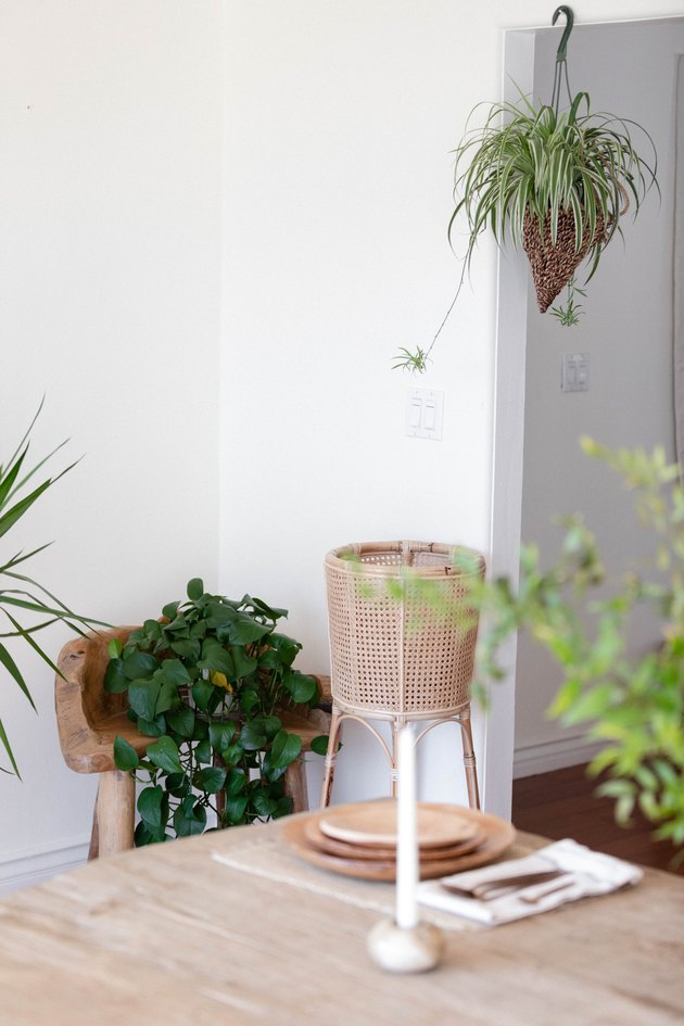 Hanging plant and sitting plant