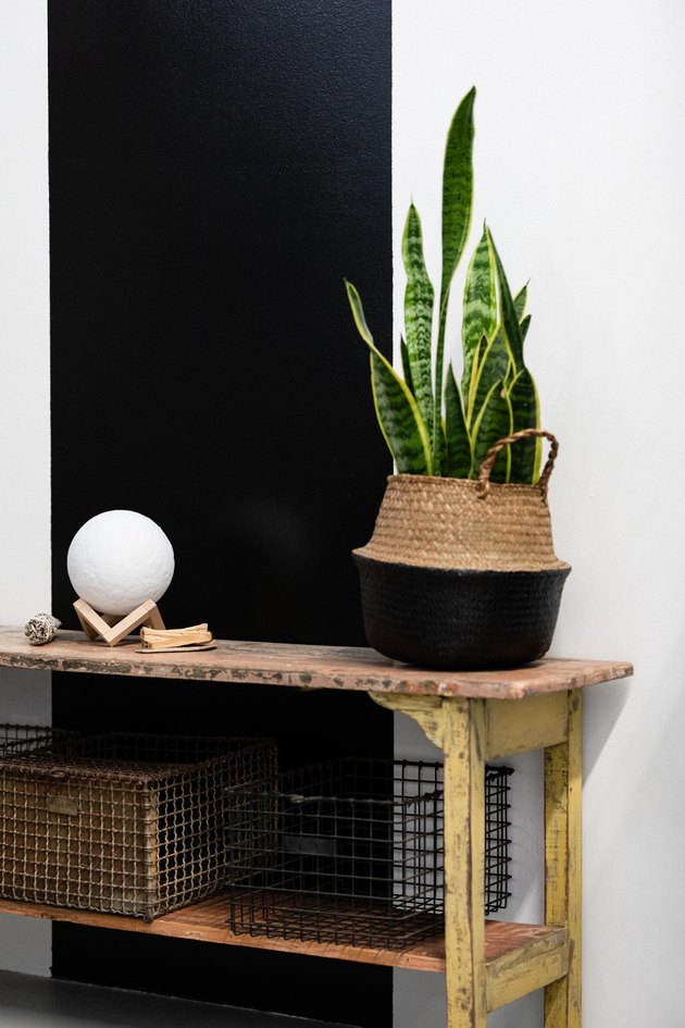 Snake plant on entryway table