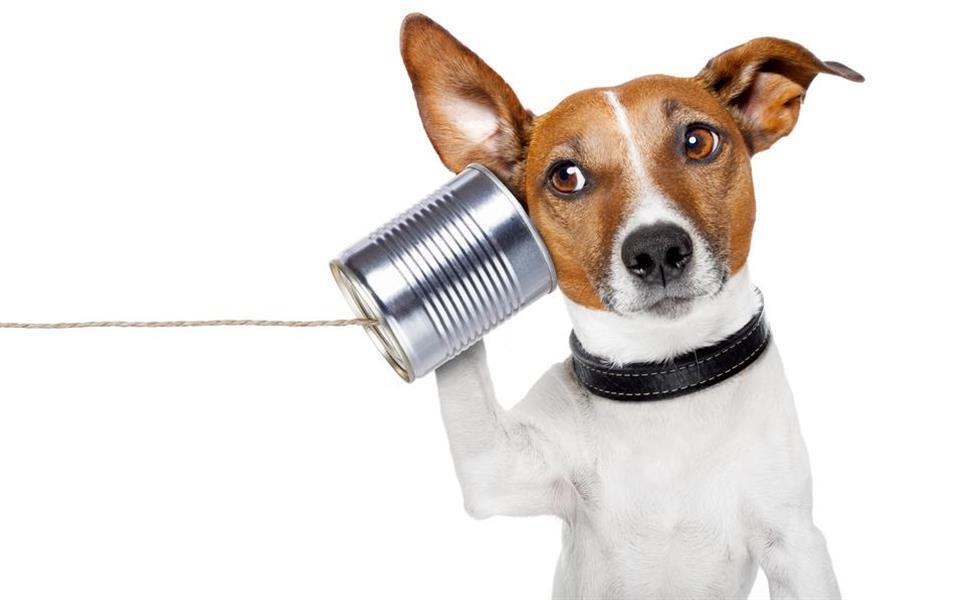 5 coisas que você provavelmente desconhece sobre a linguagem dos animais