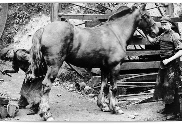 Por que a potência dos motores é medida em cavalos?