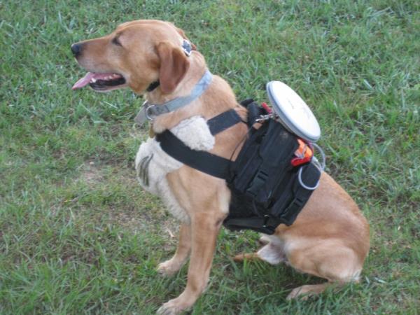 Controle remoto para cães é desenvolvido por pesquisadores norte-americanos