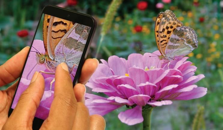 Aparelhos Android deverão passar a barreira dos 24 megapixeis em 2015 1