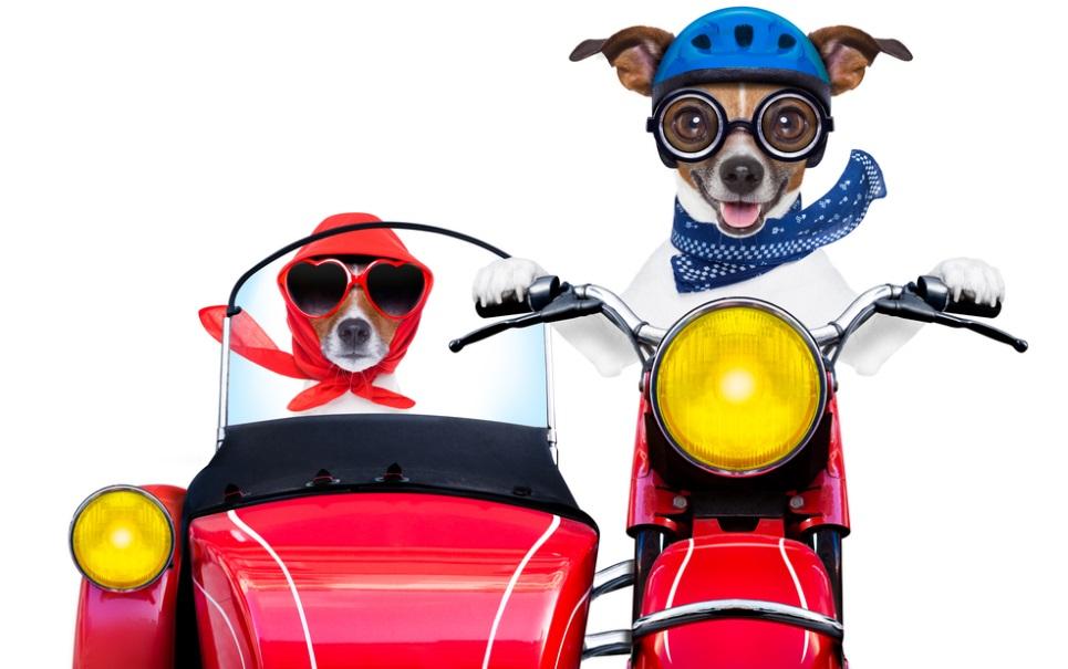Cão é flagrado dirigindo moto na Colômbia [vídeo]