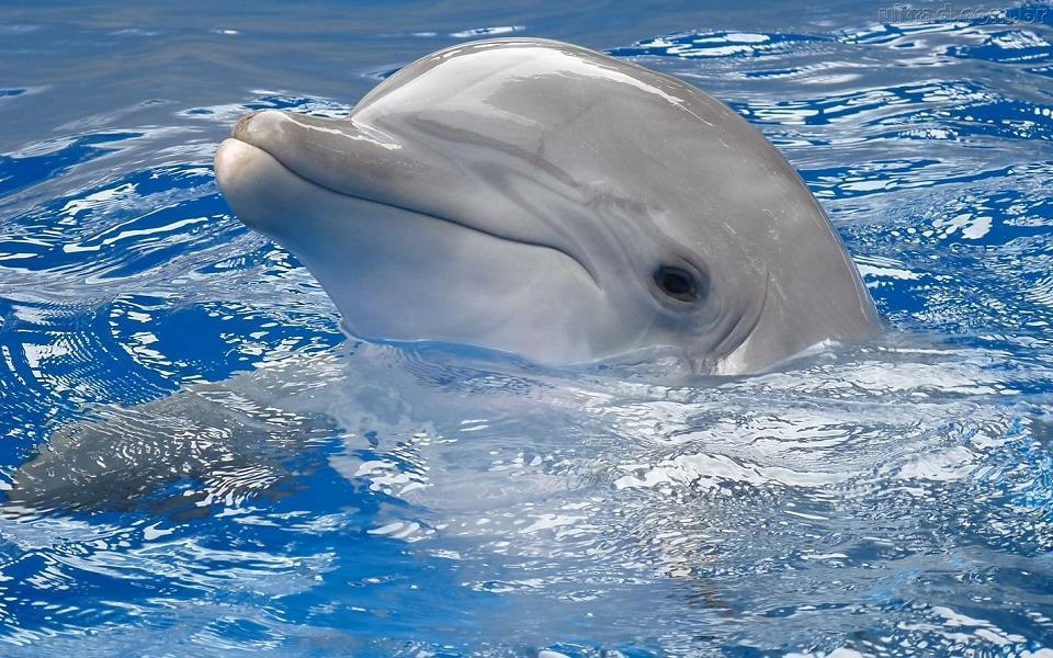 Cientistas criam tradutor que converte o som dos golfinhos para o inglês