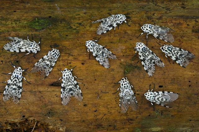 Algumas espécies de mariposas são bem bonitinhas.