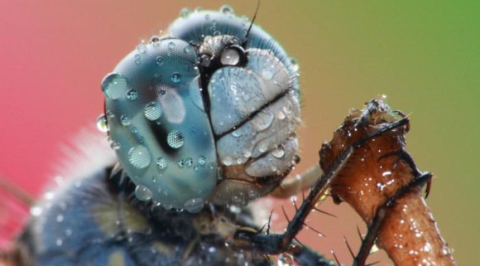 Fotos tiradas as 03:00 da manhã, enquanto os insetos estão menos ativos.