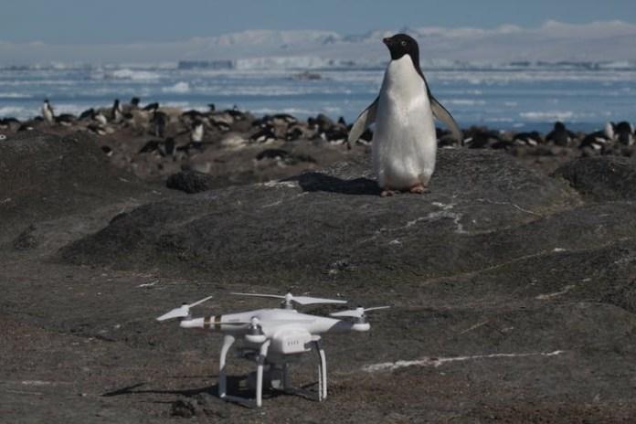 Pingüino al lado de drone