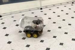 Cientistas ensinam ratos de laboratório a dirigir minicarros - TecMundo