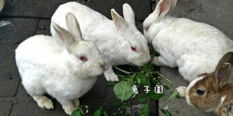 社頭景點_兔子園│令人不解的兔子園,走過路過,要錯過就.........
