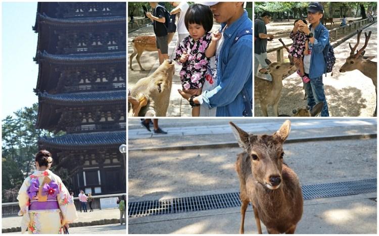 奈良公園│關西必去景點,帶著寶貝親自來餵鹿,留下最有趣的回憶~