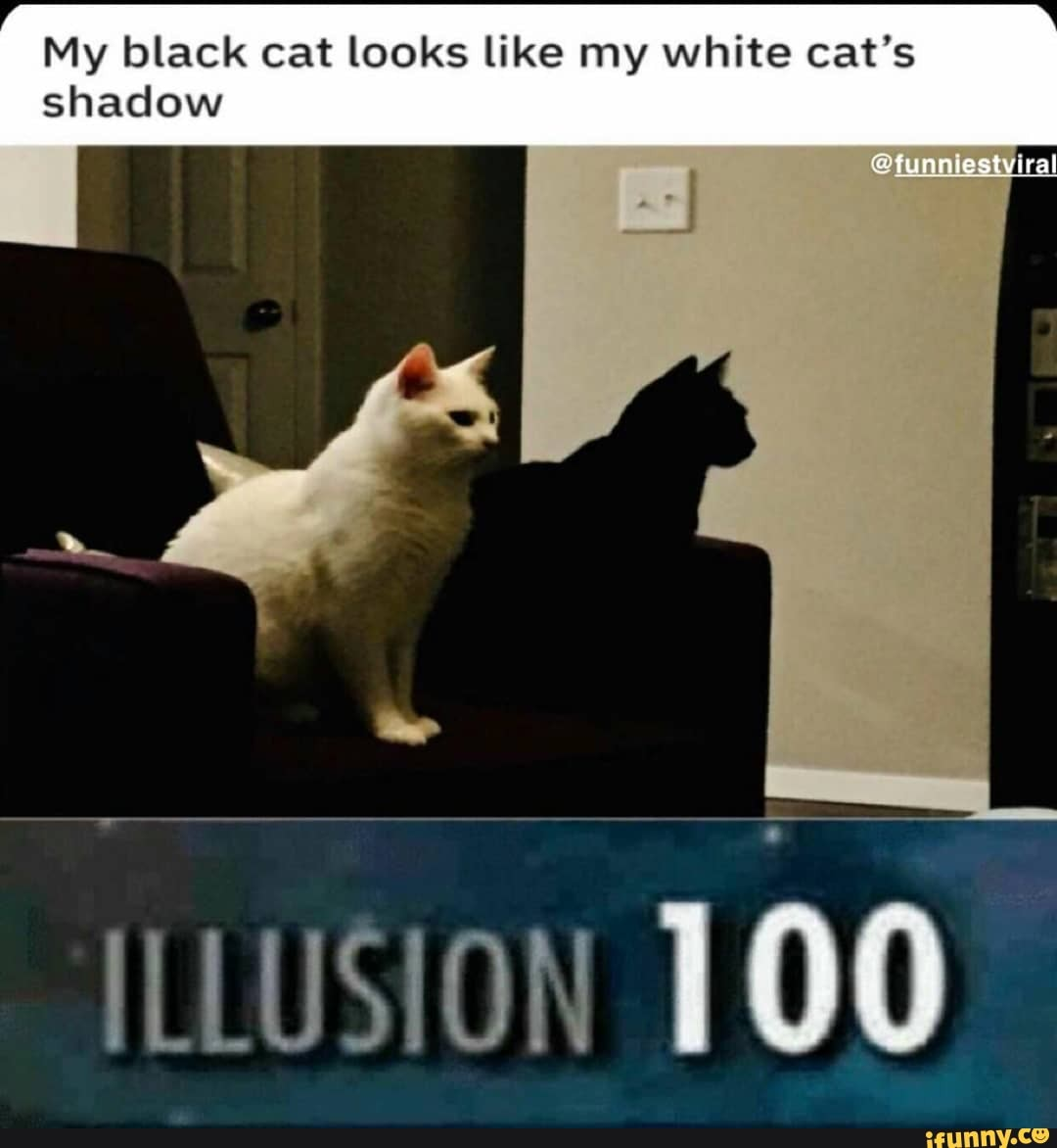 My Black Cat Looks Like My White Cat S Shadow Illusion 100 Ifunny