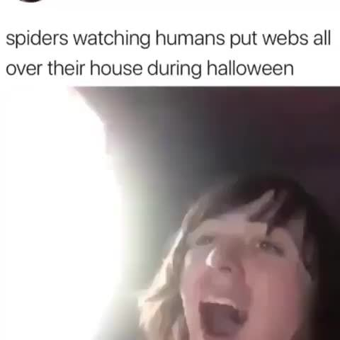 Spiders Watching Humans Put Webs All Over Their House During
