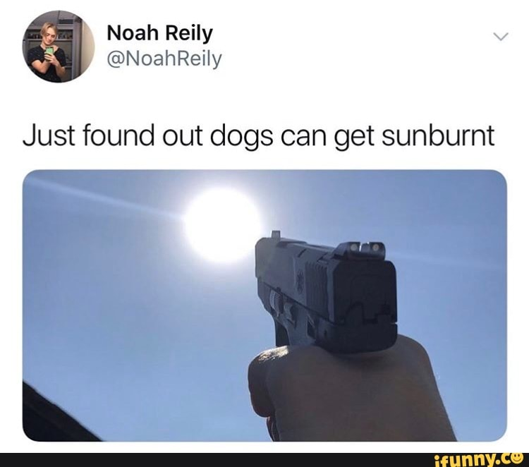 Just Found Out Dogs Can Get Sunburnt Ifunny