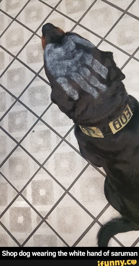Shop Dog Wearing The White Hand Of Saruman Ifunny