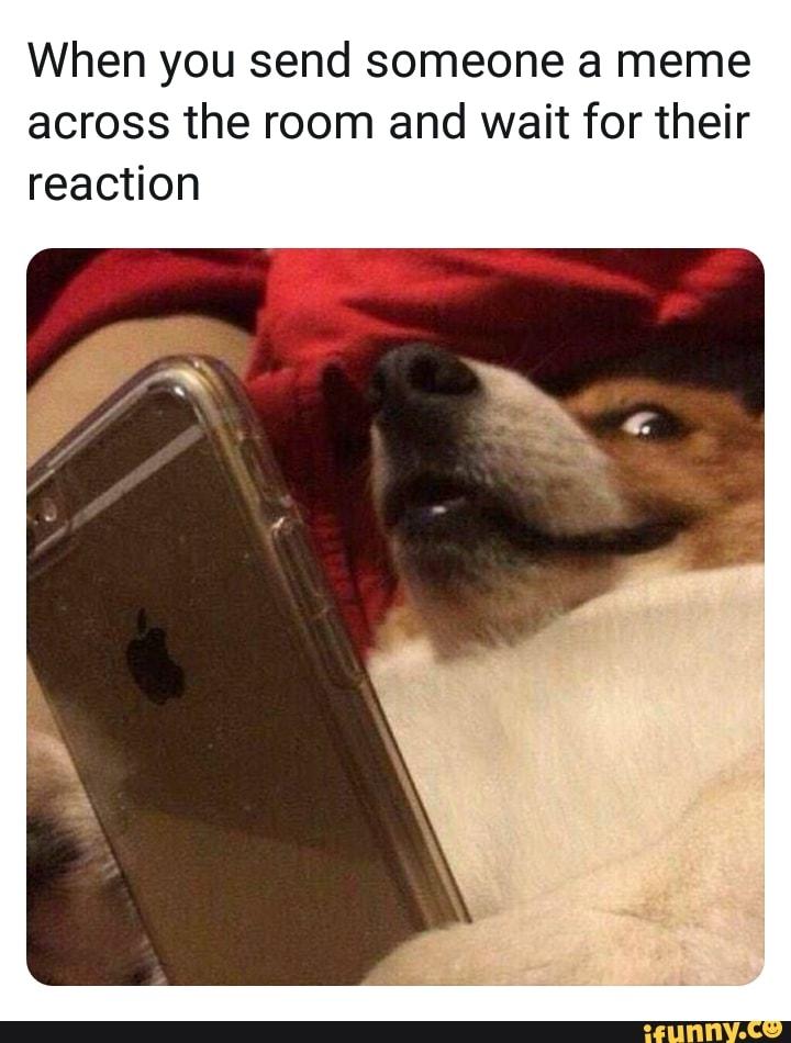 Sanitized Doggo Memes Home Facebook