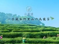 不怕買貴!阿里山高山茶價格分析:4大價格因素與3大關鍵