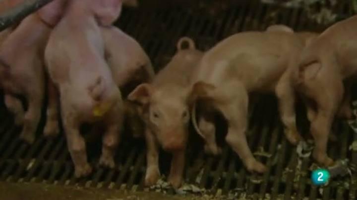 Para todos La 2 - Debate: La ganadería