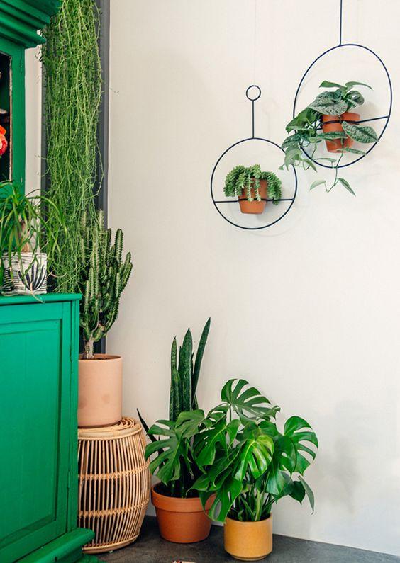 Plants For Boho Style Justina Blakeney