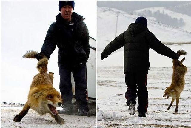 Falcon hunt in Kazakstan  (13 pics)