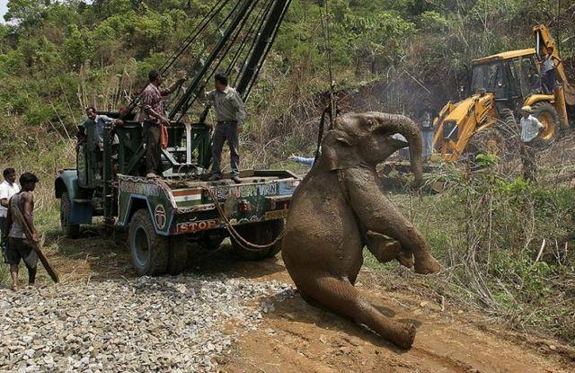 Baby elephant was ran over (6 pics)