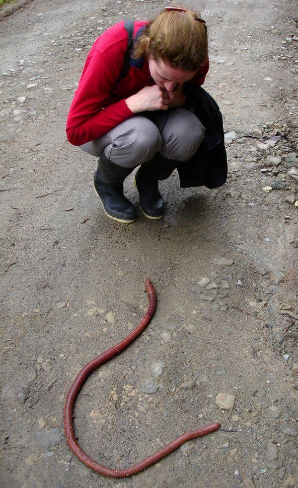 Ecuador worm (14 pics)
