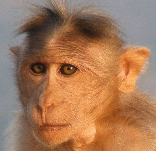The Most Popular Monkey Haircuts For The Summer 15 Pics