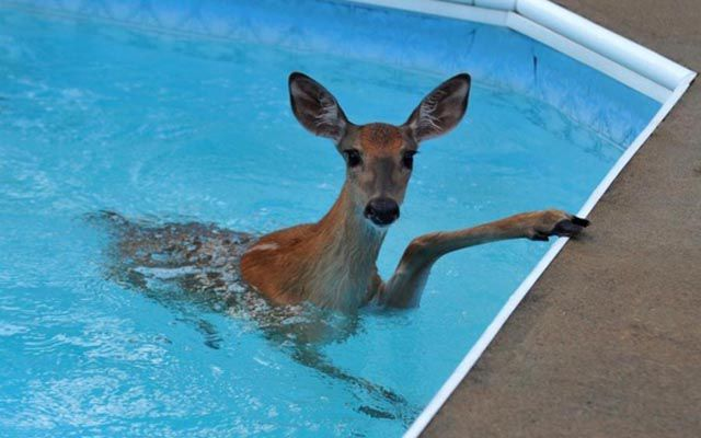 There Are Animals In The Swimming Pool (18 Pics