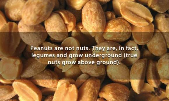 Captivating Facts That You Might Want to Know