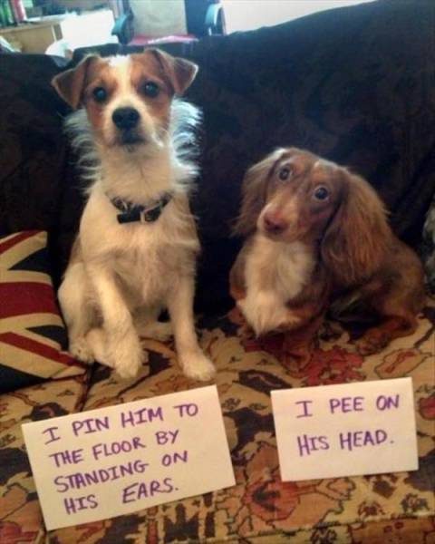 Dog Shaming Always Looks Fun