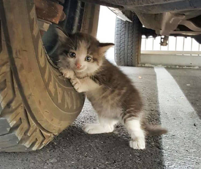 Could You Say No To This Kitty If You Found Her On The Street?