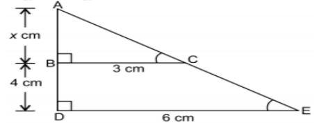 class10 maths ch6 case study image4