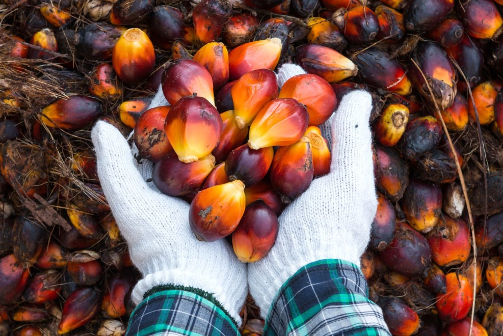 Malaysia plans to halt palm oil expansion to avoid bad image - SE Asia -  The Jakarta Post