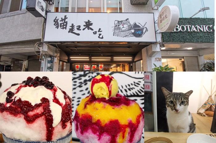 台中西區,貓起來吃!日式刨冰專賣店~也是貓咪中途之家,運氣好還能巧遇貓兒慵懶現身。