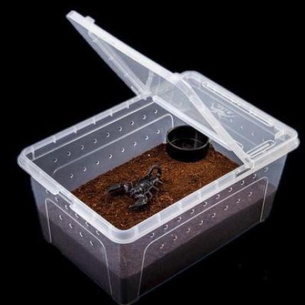 Terrarium pour scorpions, insecte
