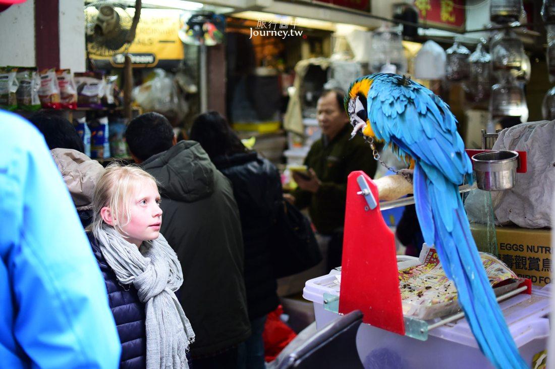 香港景點,雀鳥公園,雀鳥街,香港
