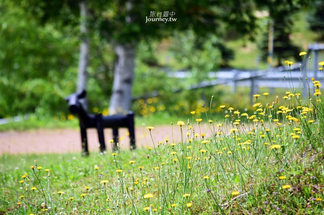 北海道景點,秩父別,玫瑰花園,北海道自駕,北海道自由行,北海道花海