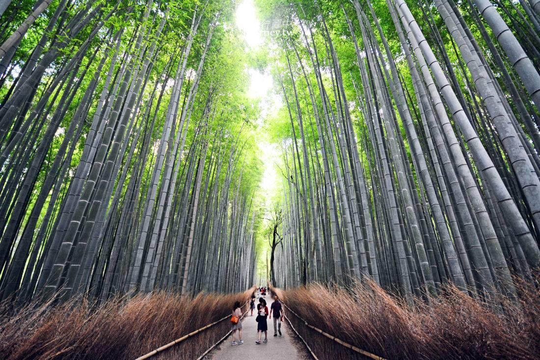 日本,京都,嵐山,嵯峨野,竹林小徑