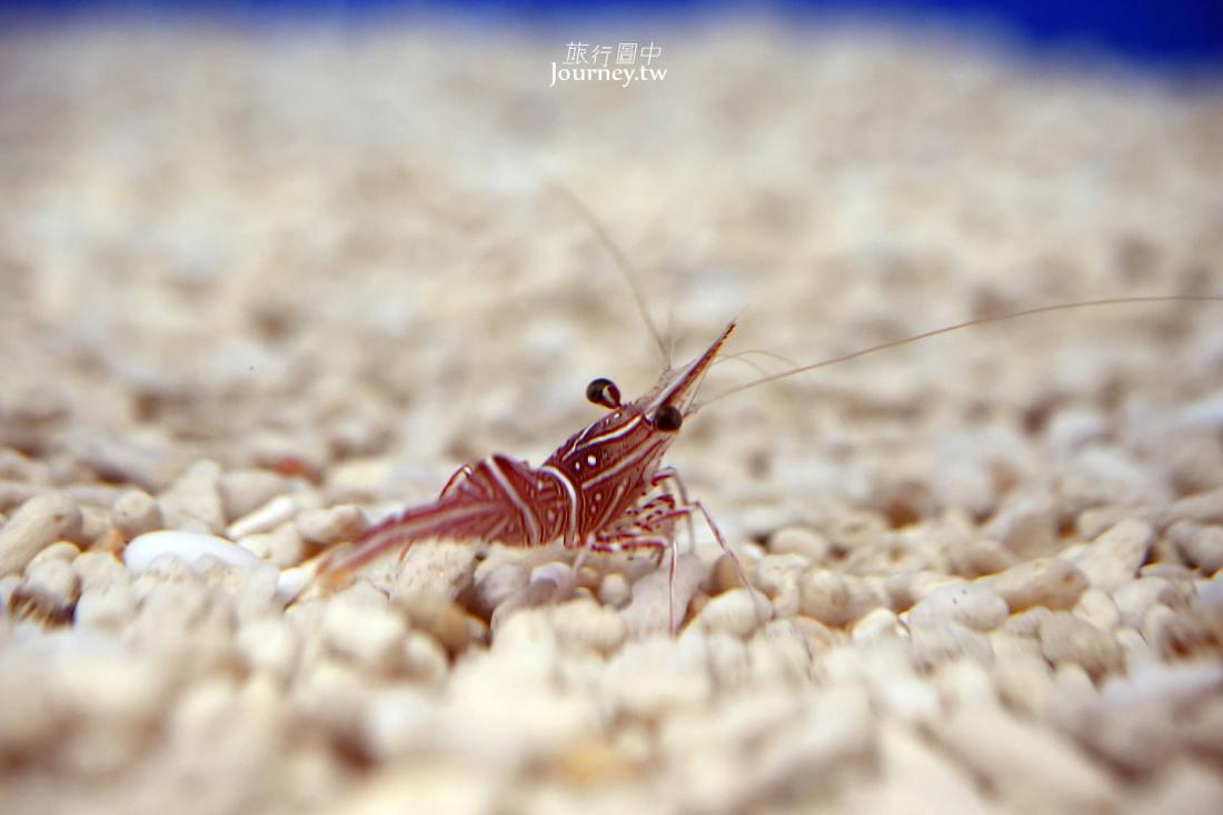 澎湖,西嶼,竹灣螃蟹博物館
