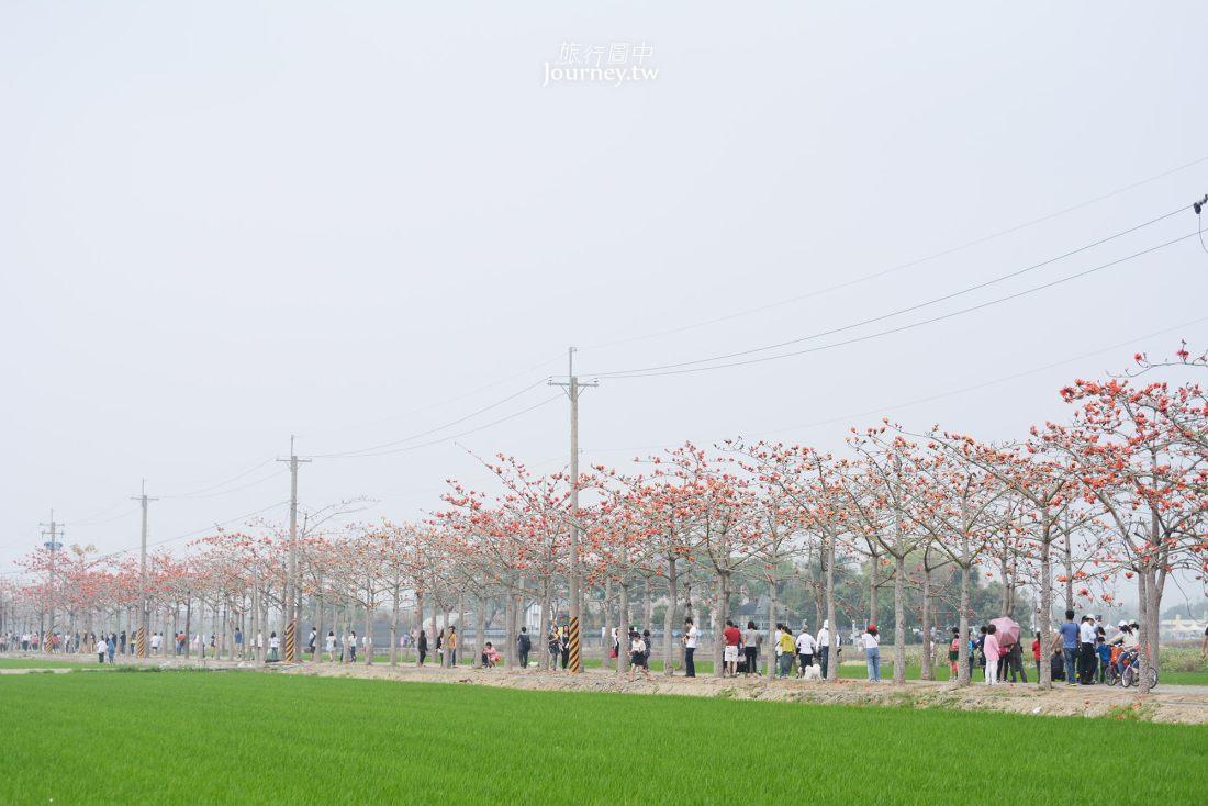 台南,白河,林初埤木棉道