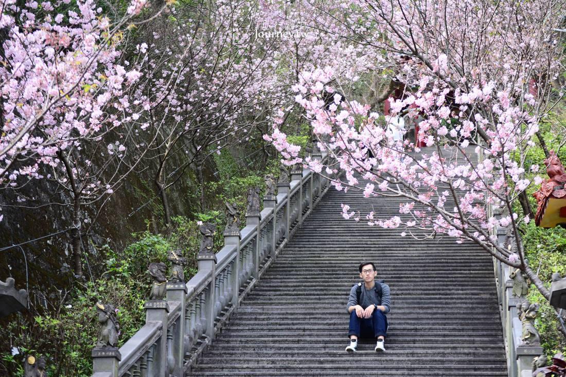 台北,內湖,碧山巖,吉野櫻