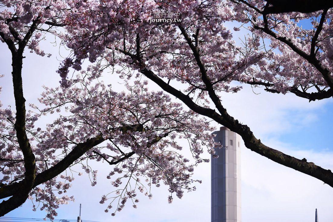 茨城,日立車站,日立,櫻花祭,櫻花,平和通り