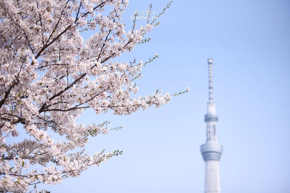 東京,淺草,隅田川,隅田公園,櫻花,吉野櫻