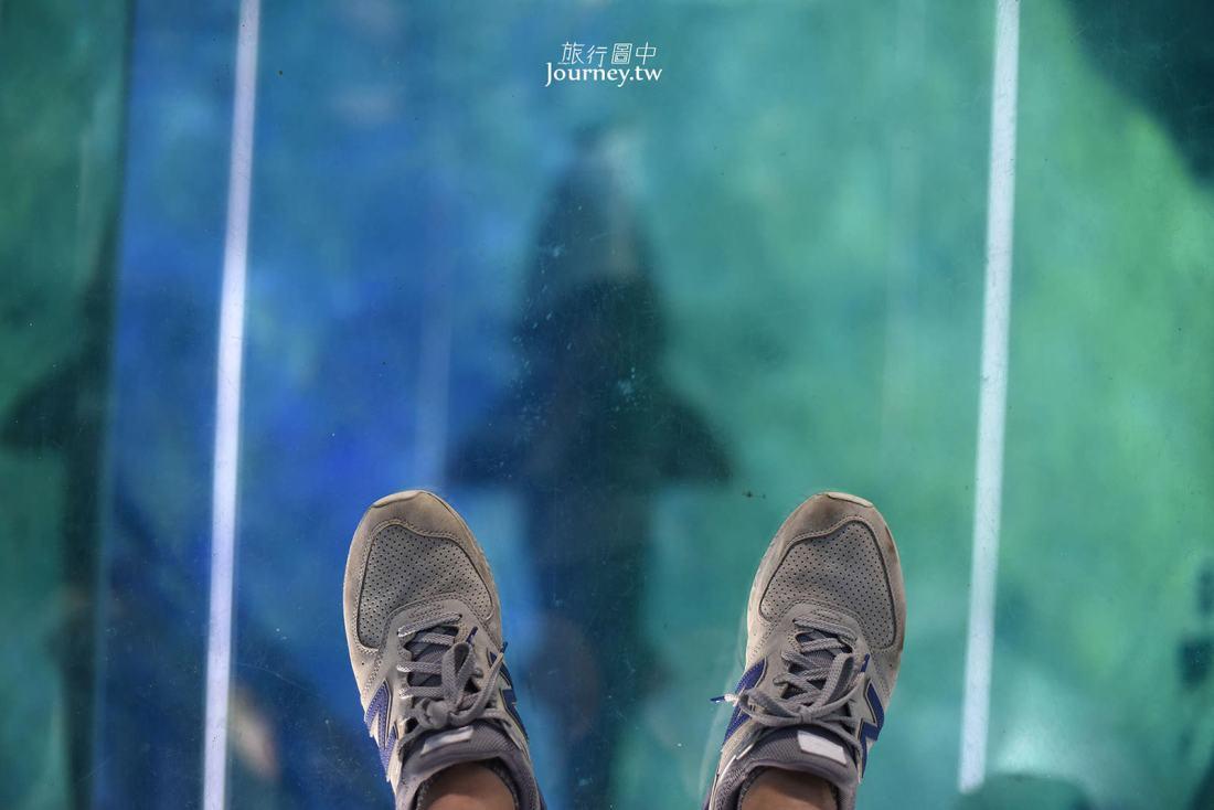 韓國,釜山,釜山水族館,海雲台,Sea Life