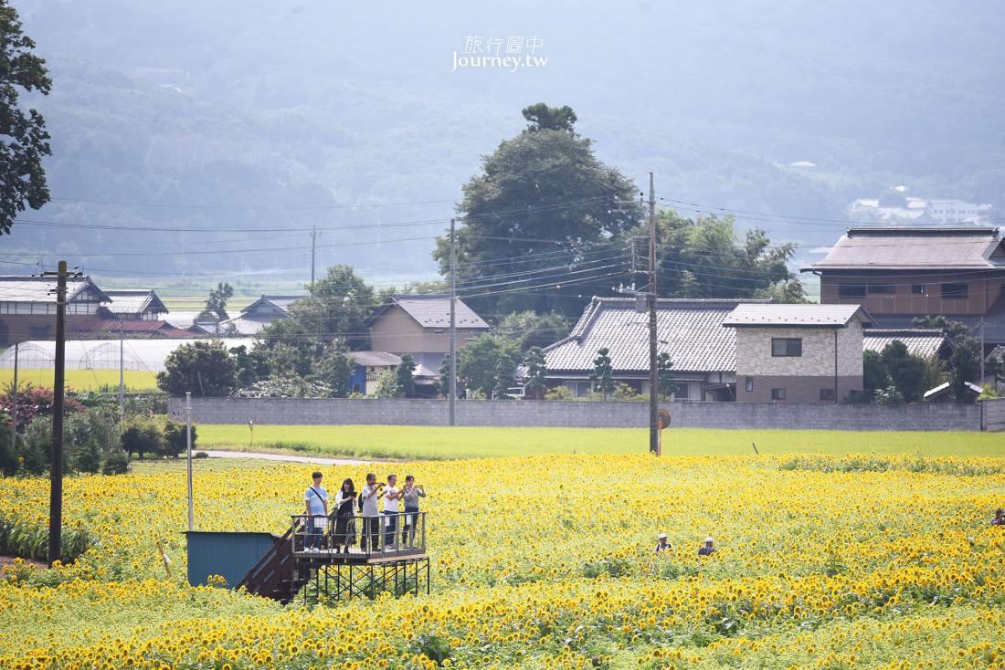 茨城,筑西,宮山公園,向日葵,ひまわり,宮山ふるさとふれあい公園,宮山鄉里交流公園