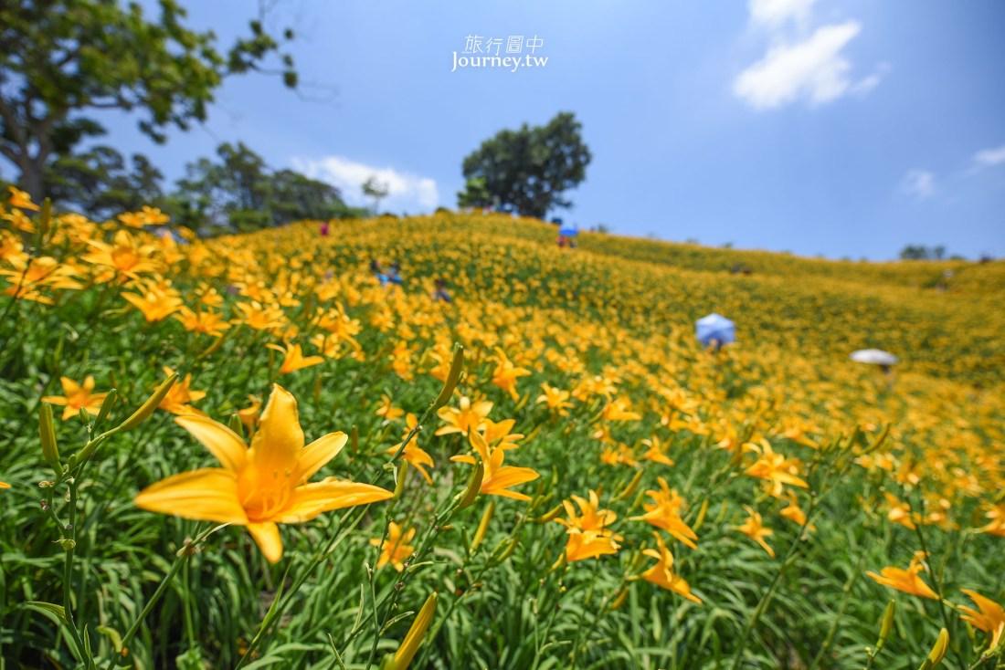 彰化縣,彰化景點,花壇鄉,花壇景點,花海,金針花,虎山巖金針花