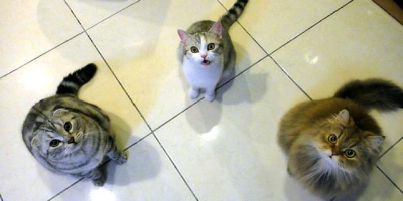 貓咪札記:3喵超愛零嘴:Vitakraft貓肉條~(換飼料:歐奇斯)