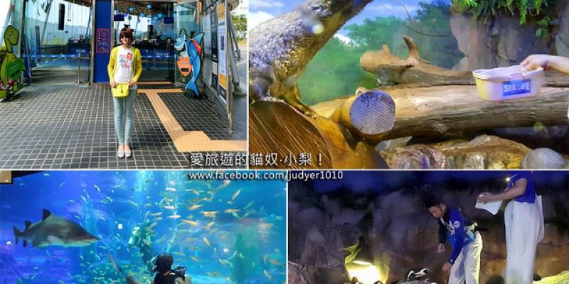 【釜山景點】SEA LIFE釜山水族館,刺激的鯊魚餵食秀和超萌的水獺餵食秀,豐富的視覺享受包你大讚過癮啦!