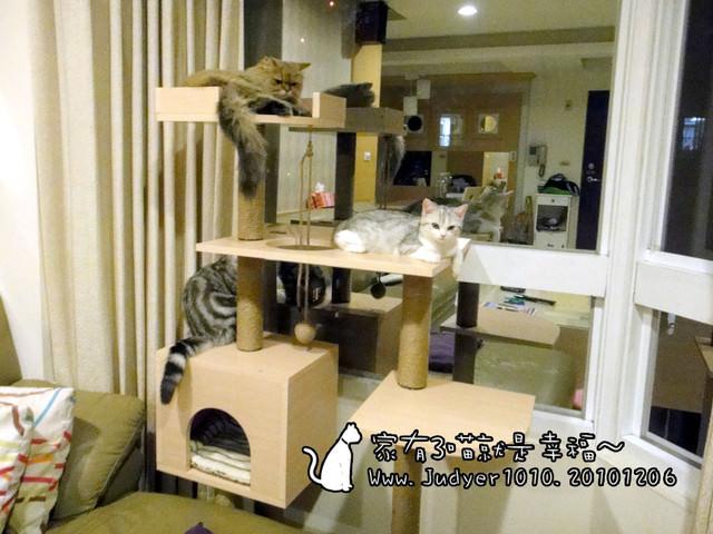 貓咪札記:家有3喵就是幸福~