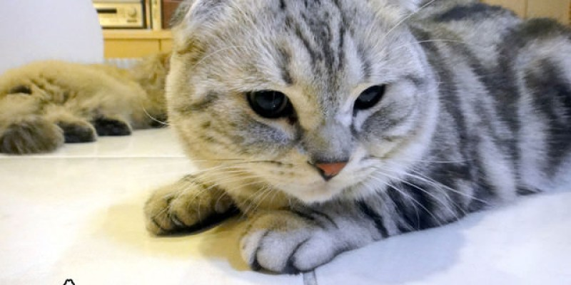 貓咪札記:弟弟是癩痢喵~
