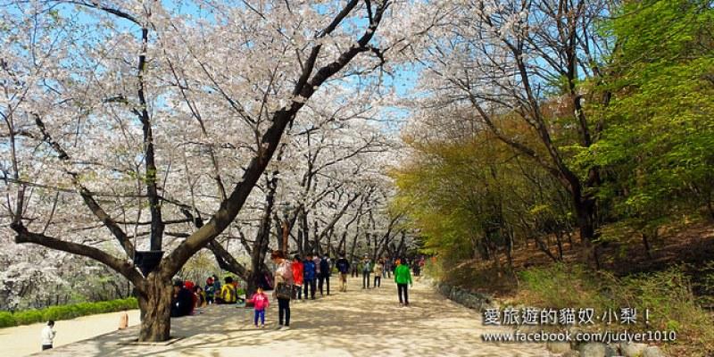 【首爾賞櫻/紳士的品格場景】鞍山公園안산공원,超浪漫唯美的櫻花樹之吻就是在此!